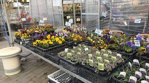 お花の販売もあります✿