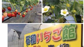 12種類のイチゴを食べ放題!
