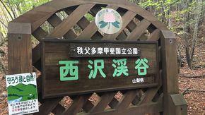 国内24箇所「癒し効果のある森」
