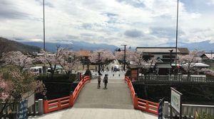 桜の時期は見ものです!