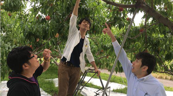 桃狩りを体験