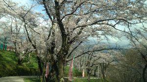 県内随一の桜の名所
