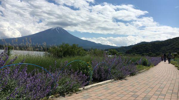 四季折々の富士山を!春には色鮮やかな花と一緒に。