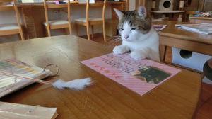 猫もスタッフの方も気さくでやさしくて気軽に行けます♪