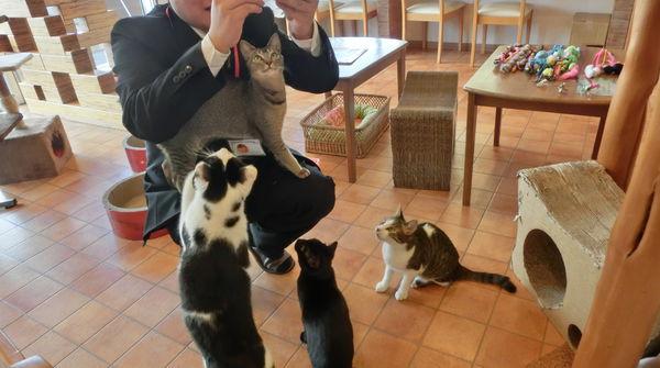 猫集合!わぁーーーーー!