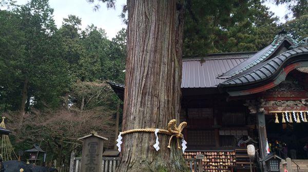 拝殿の両脇のご神木