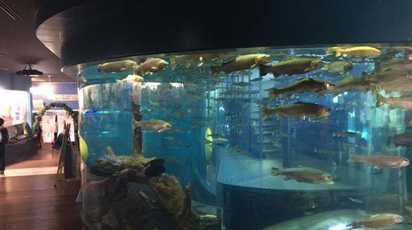 透明度の高い富士の湧水を使った【淡水魚専門水族館】