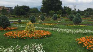 綺麗なお花畑