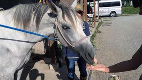 馬と触れ合える