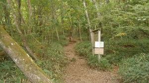 森の中のちょっとしたお散歩