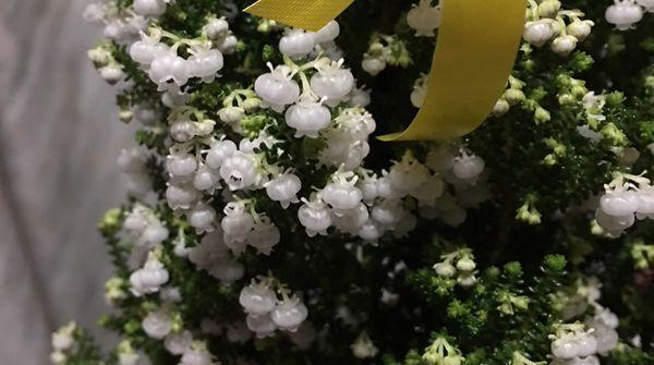 小さなお花がたくさんついて****かわいいーーーー❤!!